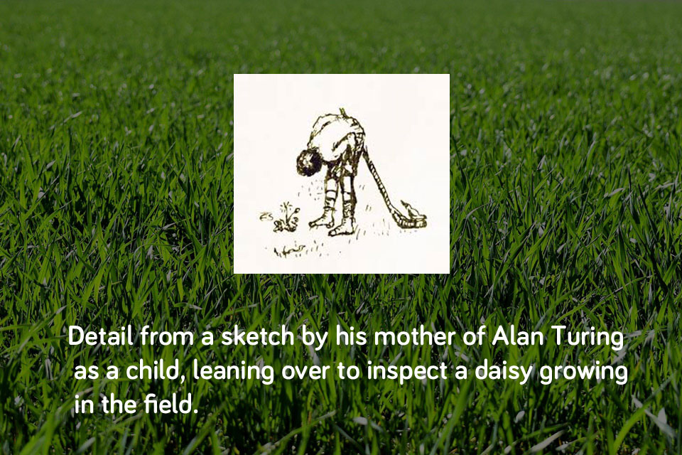 Watching Daisies in the Field - Detail of a oen and ink sketch of Alan Turing as a child leaning over to inspect a daisy growing in a field, placed on a background of grass